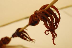 Conservació de pops, recreació pel Museu de Badalona